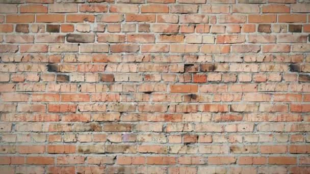 Bezešvá smyčka, pohybující se na pozadí, stará cihlová zeď