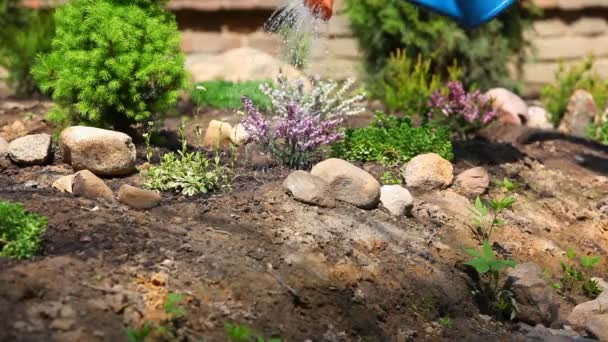 Pflanzen im Sommergarten gießen.