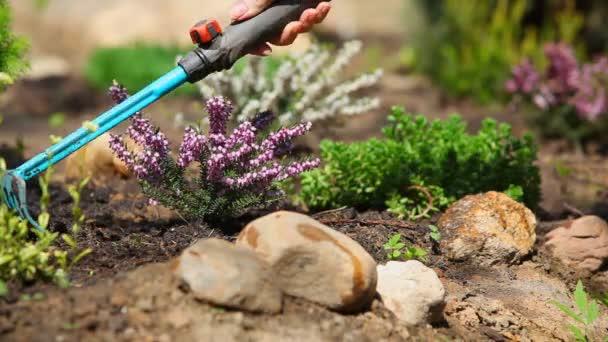 Odstraňování plevele rostlin v letní zahradě.