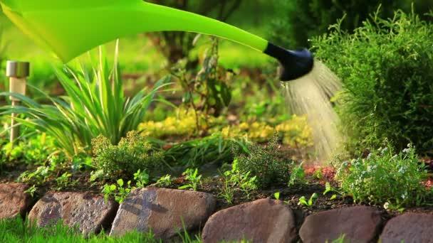 Zalévání rostlin v létě.