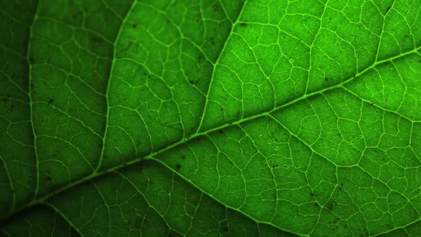 Zöld levél makró megtekintése.