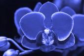 Fényképek Gyönyörű kék orchidea ág absztrakt elmosódott háttér