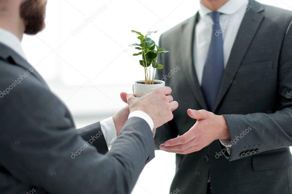business partners are holding a young seedling
