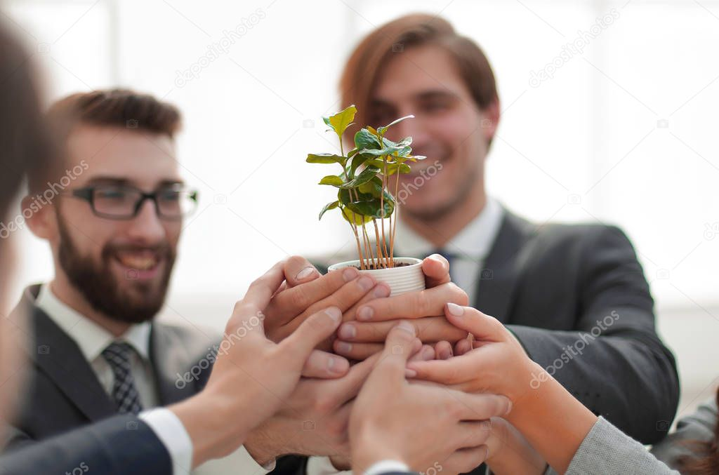 business team shows young sprouts of trees
