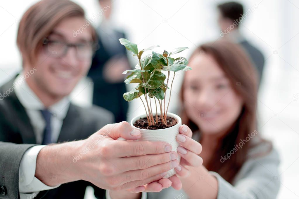 seedling in the hands of young business people