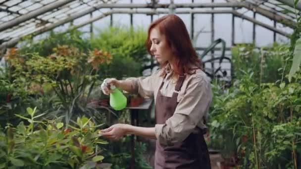Trabajador de invernadero usando delantal es regar las plantas y ...