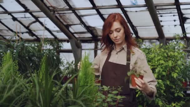 Attractive female farmer wearing apron is sprinkling plants with water while working inside large greenhouse. Profession, growing flowers, workplace and people concept.