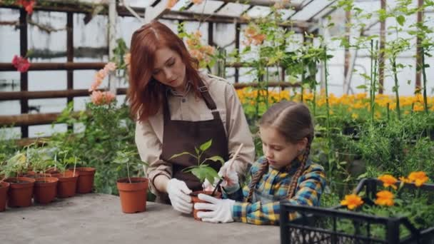 Young female farmer teaching her cute daughter to hoe soil in pot with little spade while working together in light greenhouse. Growing plants and childhood concept.
