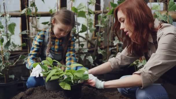 Veselí zahradníci matka a dcera jsou výsadba mladých sazenic v hrnci přidáním půdy a mluví. Žena a dítě jsou nošení zástěry a rukavice.