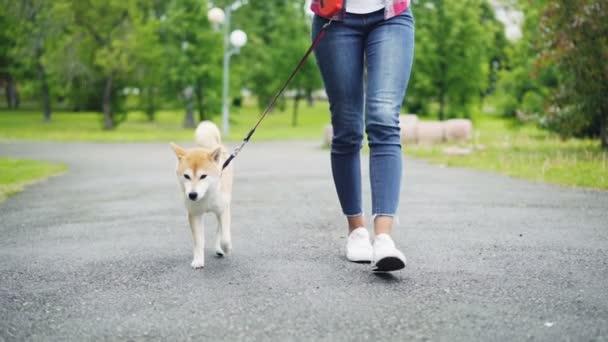 Zpomaleně nízké snímek mladé ženy v džínách chůzi její rozkošný malý pes v městském parku. Silniční, zelený trávník a stromy, džíny a obuv je viditelný.