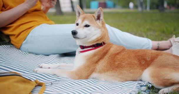 Portrét Šiba inu psa ležící na přikrývce na trávě v parku vedle majitele