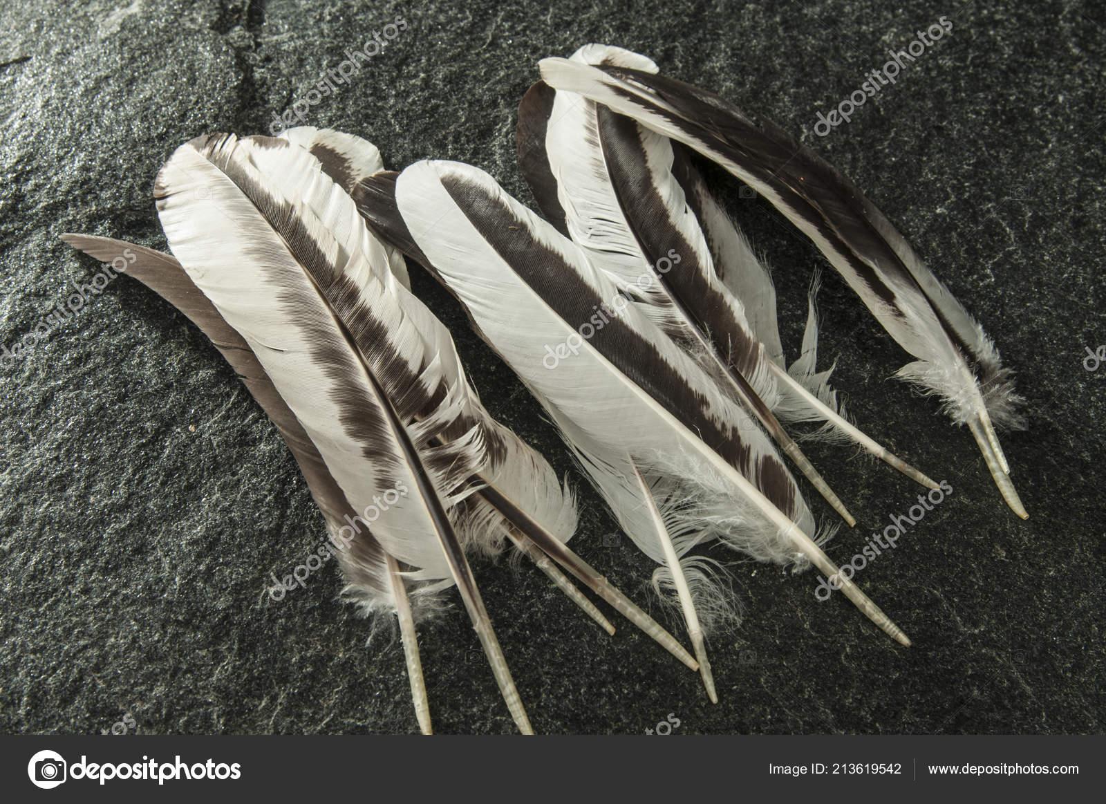 φυσικό πέος φωτογραφίες μεγάλο πουλί αντίδραση cam