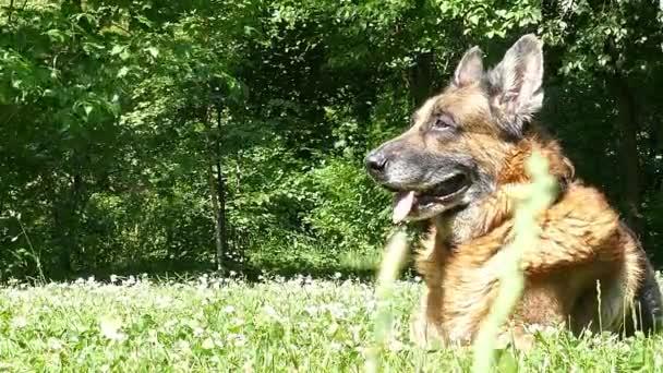 Öreg kutya a szabadban