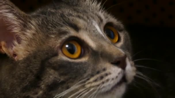 Tvář kočky detailní zobrazení