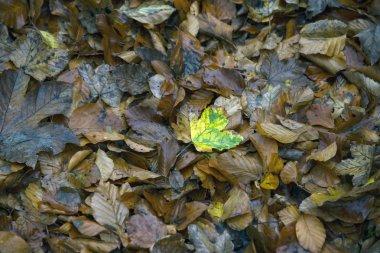 "Картина, постер, плакат, фотообои ""падшие листья, фон "", артикул 223962210"