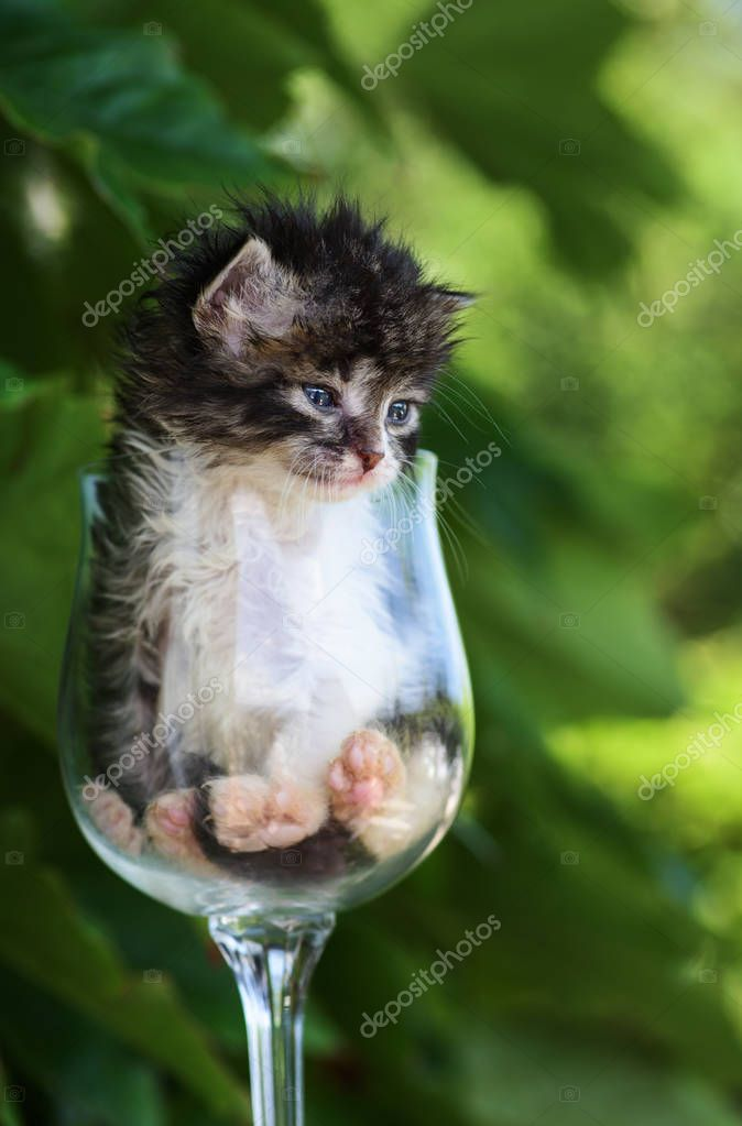 fluffy tubby newborn kitten in the glass