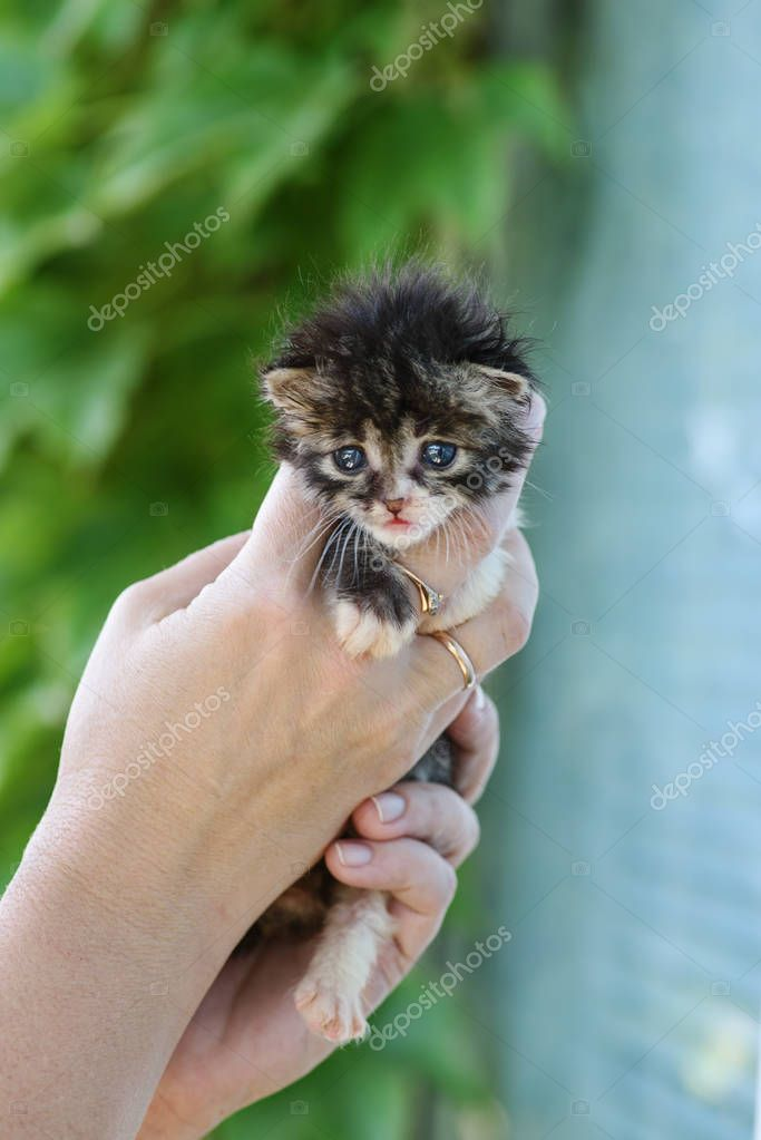 newborn fluffy kitten in the womans hands