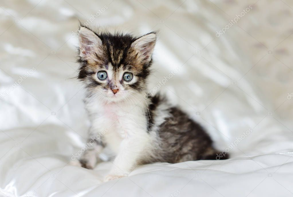 domestic little kitten sitting on the bed