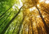 Roční období se mění v lese