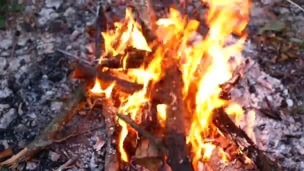 tábortűz tábortűz nyári égő tűz tábortűz, a 4k