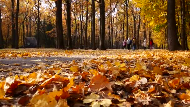 autumn city park. Beautiful background
