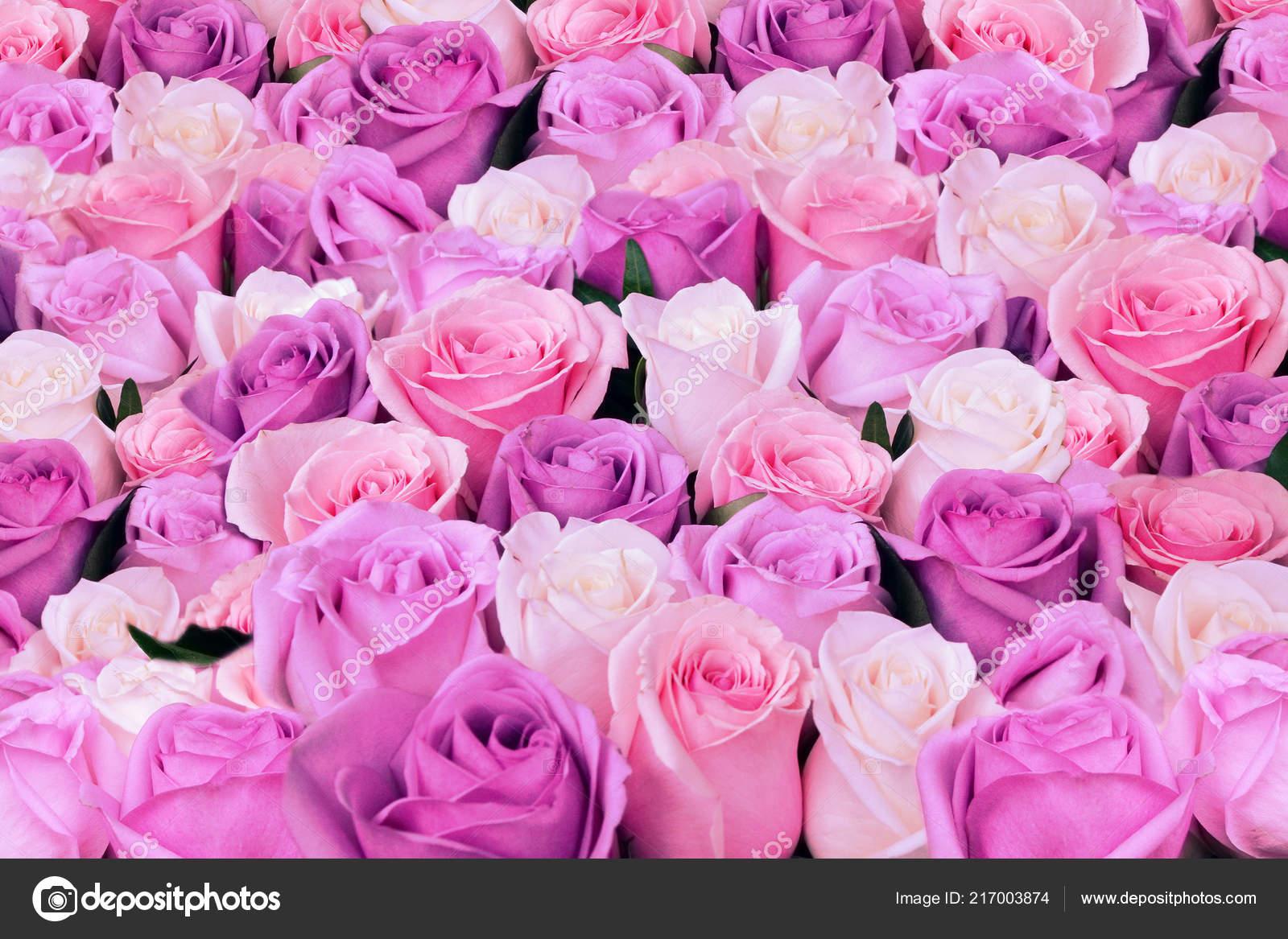 Fondo Flores Naturales Rosas Rosadas Blancas Enfoque Suave Fotos