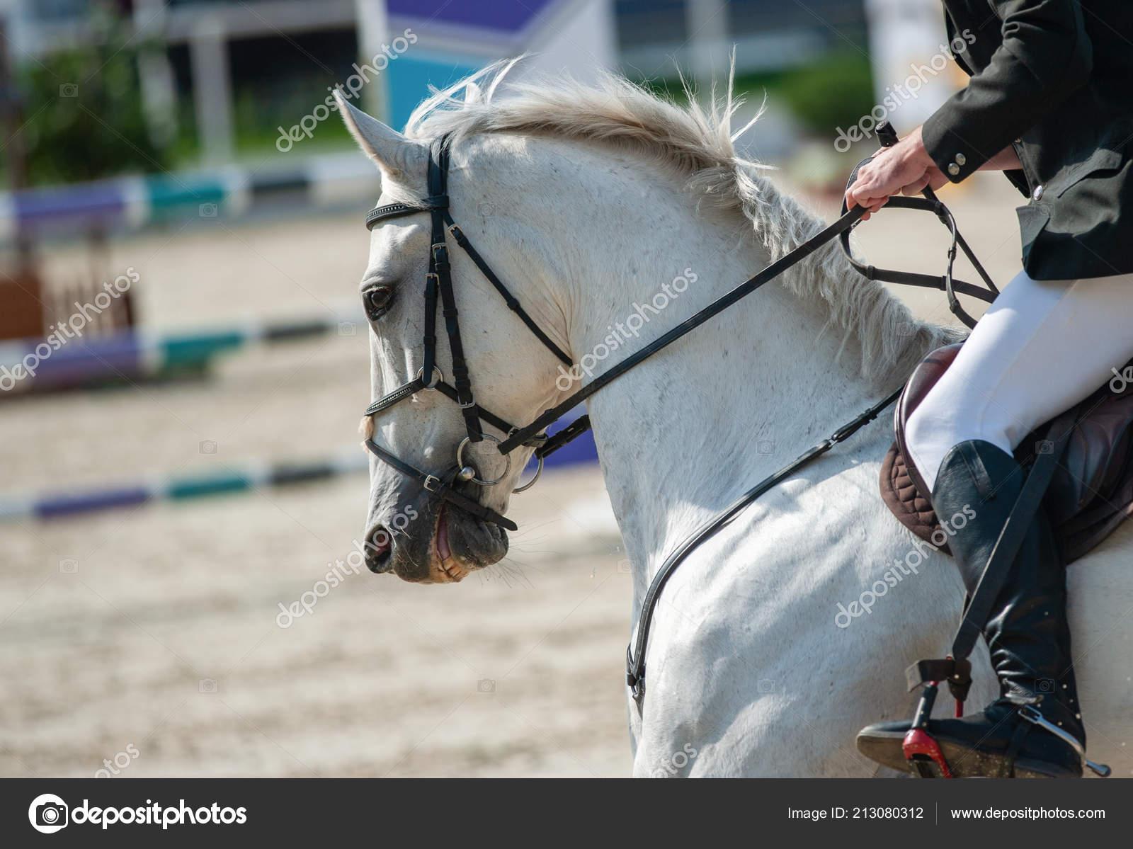 White Horse Show Jumping Rider White Horse Show Jumping Championship Stock Photo C Mari Art 213080312