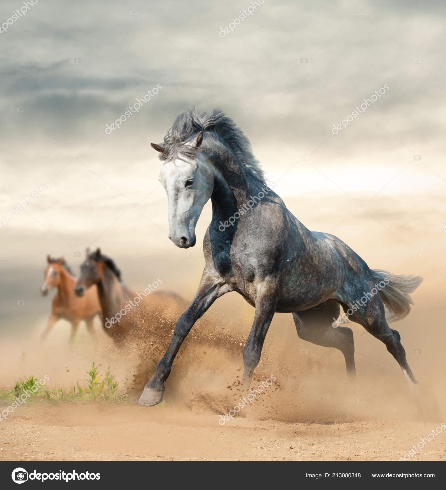 Beautiful Wild Horses Running Freedom Prairies Stock Photo C Mari Art 213080348