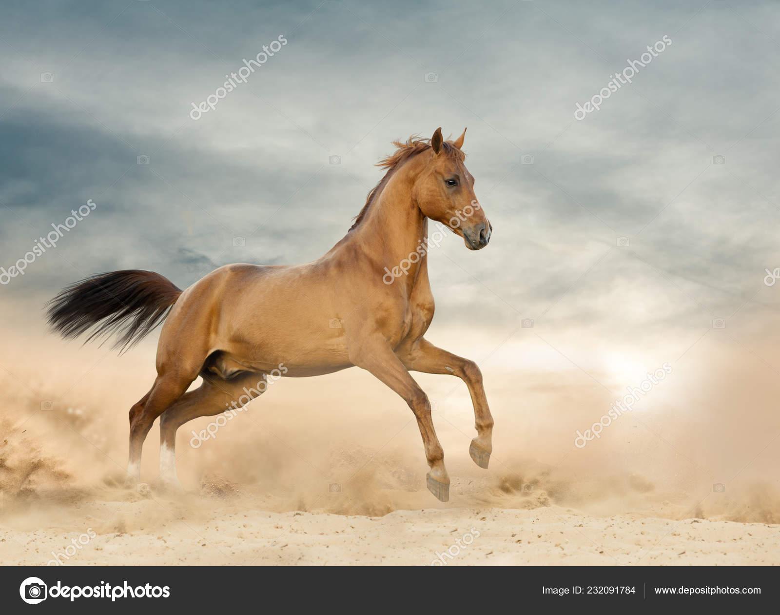 Beautiful Wild Stallion Running On A Wild Stock Photo C Mari Art 232091784