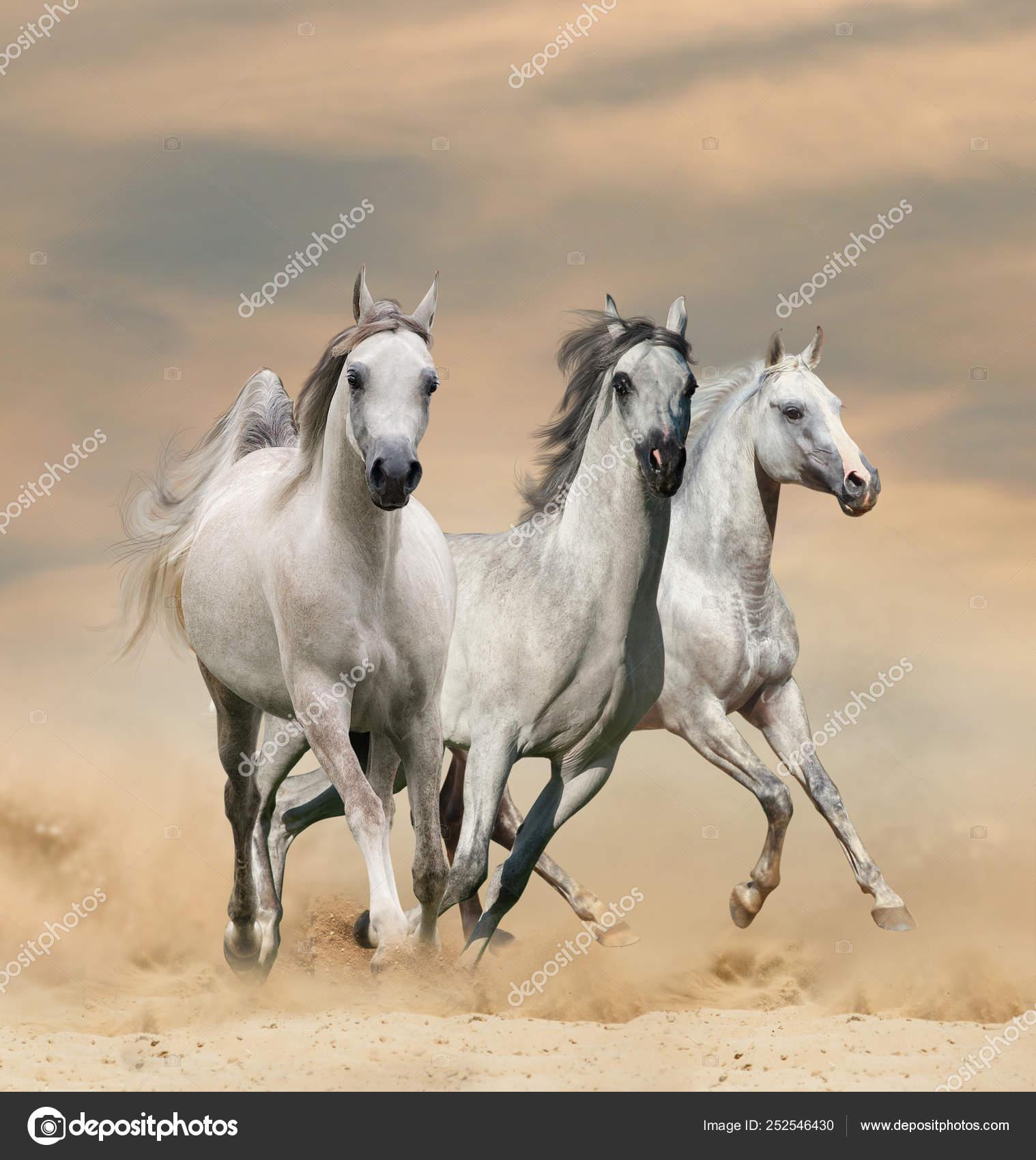 Arabian Horses In Desert Stock Photo C Mari Art 252546430