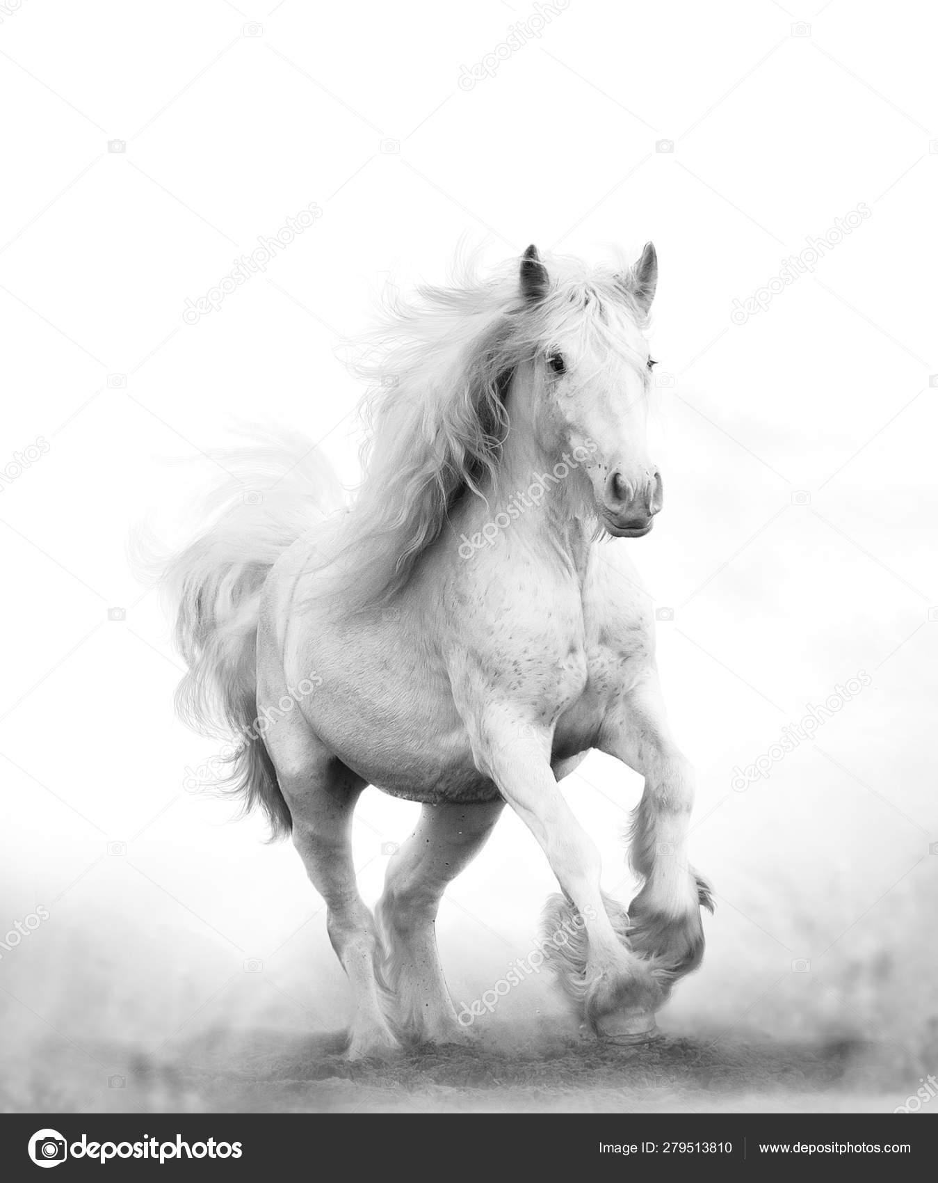 Beautiful Snow White Horse Running Stock Photo C Mari Art 279513810