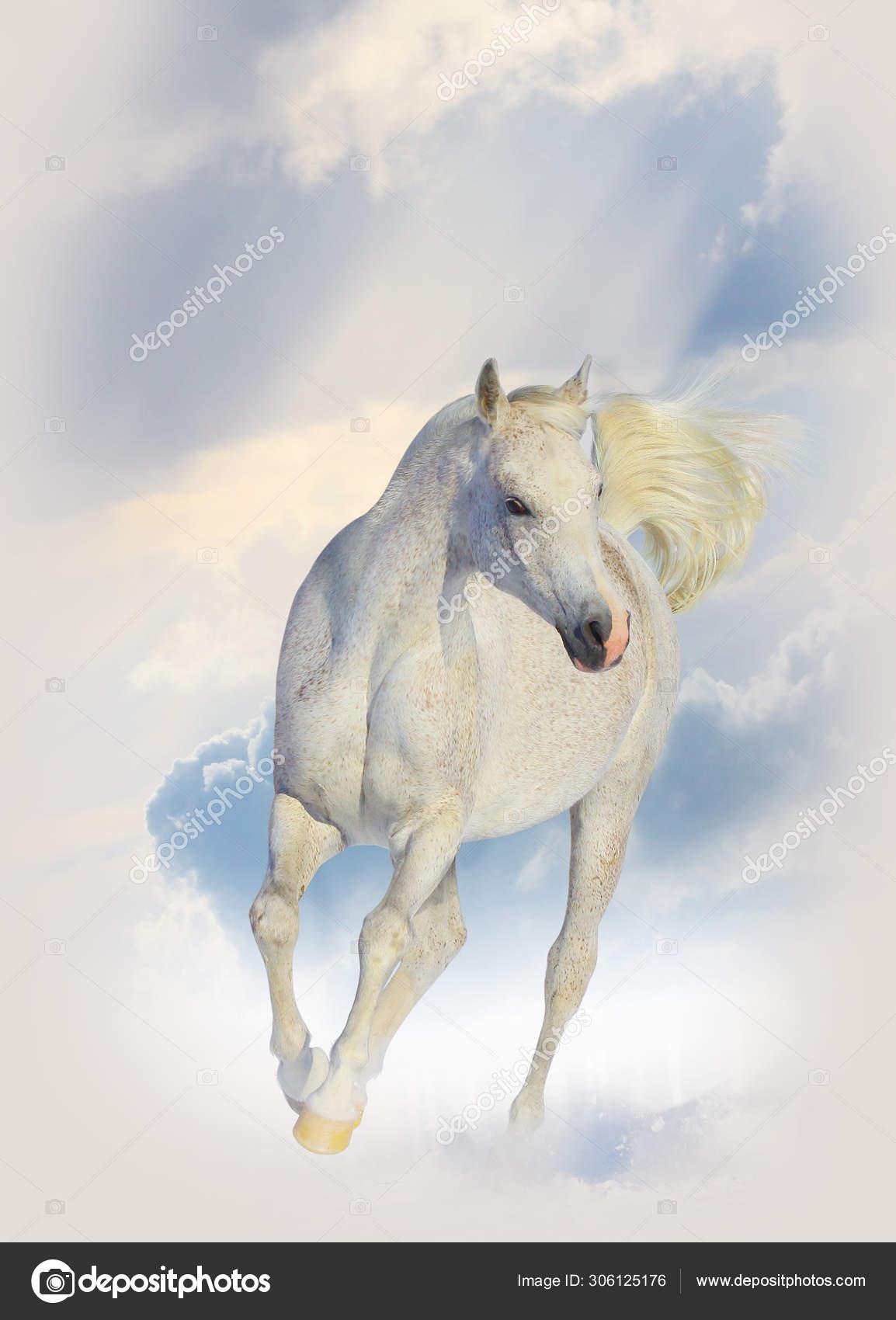 Purebred White Arabian Horse In Winter Stock Photo C Mari Art 306125176