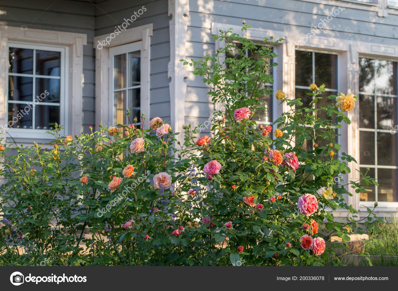 Roses Et Le Jardin D Herbes Aromatiques A L Exterieur D Une Maison