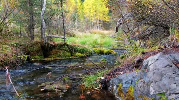 Lesní potok v altajské hory Tajga v deštivé podzimní den