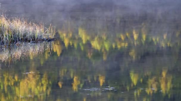 Reflection of autumn forest with Larix sibirica in water of mountain lake Dzhangyskol on Eshtyke plateau. Altai, Siberia, Russia