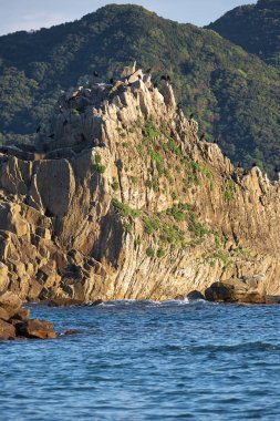 The great cormorants birds sitting on the folding cliffs of Hash