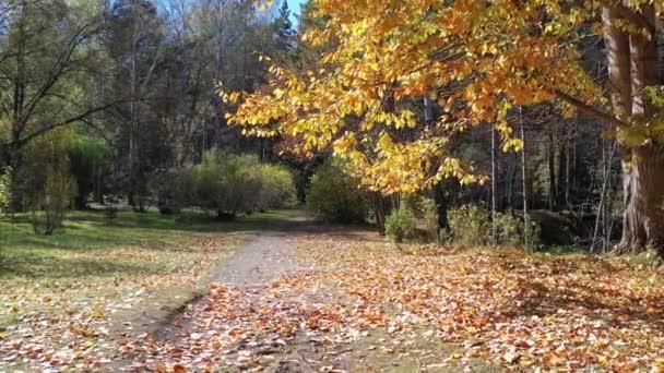 Légi felvétel színes park őszi szezonban fák és sárga levelek. Őszi természetes háttér. Szibéria, Oroszország