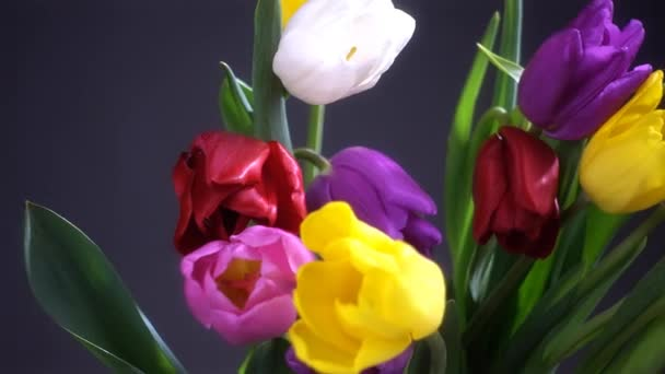 Close up view of colorful tulip flowers on dark background