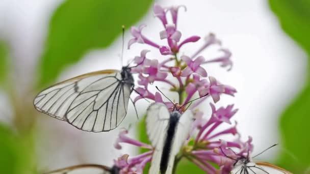 Closeup view of butterflies gathering nectar