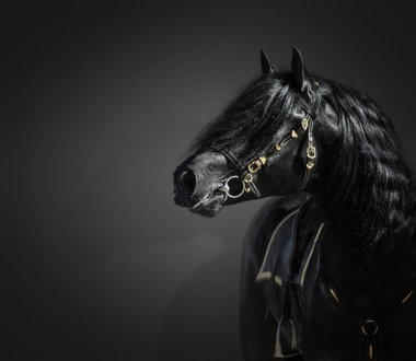 Portrait of black Pura Spanish stallion