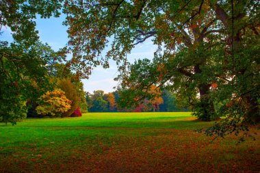 Picturesque park with old trees and large meadow