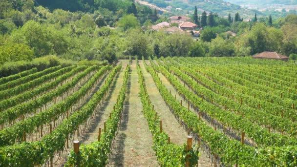 Pohled na vinici v Řecku - Řecká krajina na venkově 4k