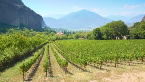 Panoramatický výhled na vinici v Řecku - Řecká krajina na venkově 4k