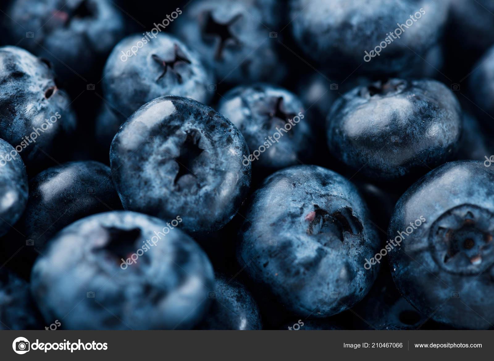 Fresh Blueberries Background Texture Blueberry Berries