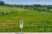Degustace v Kalifornii. Sklenka bílého vína a vinohrady.