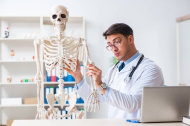 Yong male doctor with skeleton isolated on white stock vector