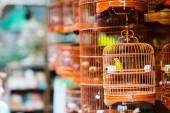 Fotografia Uccelli in gabbie in vendita presso gli uccelli mercato, Kowloon Hong Kong, popolare destinazione turistica