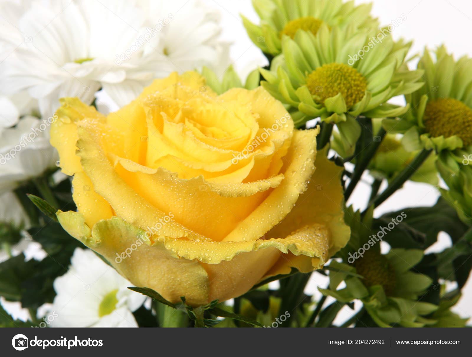 Etwas Neues genug Gelbe Rosen Und Grünen Chrysanthemen — Stockfoto © Elena777 #204272492 &MD_39