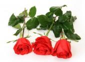 Fotografie Kytice růží na bílém pozadí
