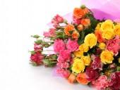 Fotografie pestrobarevným růží na bílém pozadí